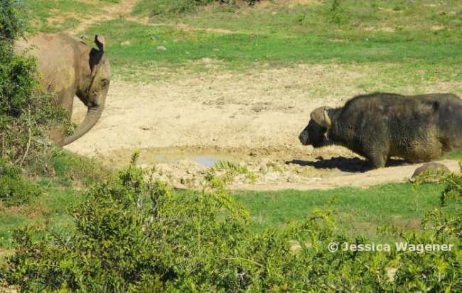 South Africa, Scotia Game Reserve.