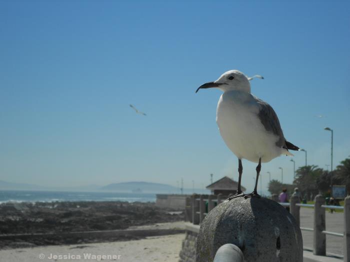 Capetown, Sea Point.